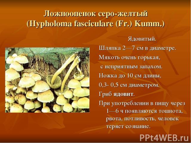 Ложноопенок серо-желтый (Hypholoma fasciculare (Fr.) Kumm.) Ядовитый. Шляпка 2—7 см в диаметре. Мякоть очень горькая, с неприятным запахом. Ножка до 10 см длины, 0,3- 0,5 см диаметром. Гриб ядовит. При употреблении в пищу через 1—6 ч появляются тошн…