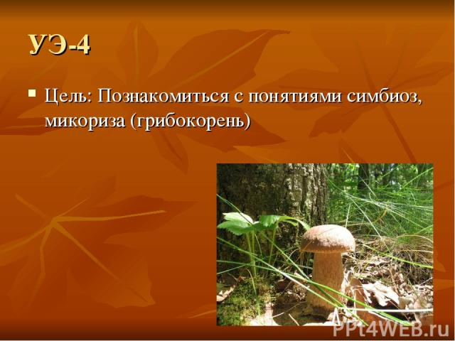 УЭ-4 Цель: Познакомиться с понятиями симбиоз, микориза (грибокорень)