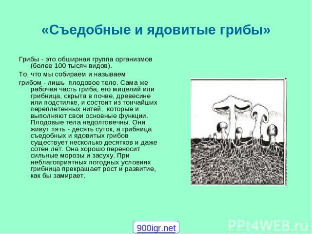 «Съедобные и ядовитые грибы» Грибы - это обширная группа организмов (более 100 тысяч видов). Tо, что мы собираем и называем грибом - лишь плодовое тело. Сама же рабочая часть гриба, его мицелий или грибница, скрыта в почве, древесине или подстилке, …