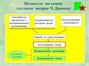 Механизм эволюции (согласно теории Ч.Дарвина) Способность организмов к неогранич