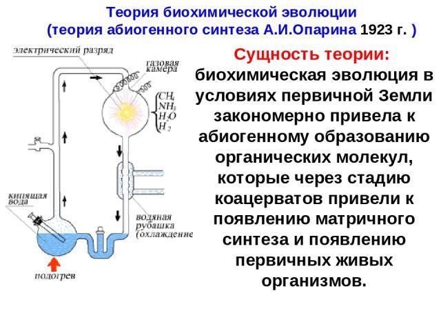 Теория биохимической эволюции (теория абиогенного синтеза А.И.Опарина 1923 г. ) Сущность теории: биохимическая эволюция в условиях первичной Земли закономерно привела к абиогенному образованию органических молекул, которые через стадию коацерватов п…