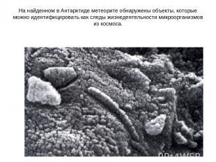 На найденном в Антарктиде метеорите обнаружены объекты, которые можно идентифици