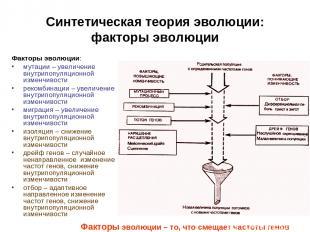Синтетическая теория эволюции: факторы эволюции Факторы эволюции: мутации – увел