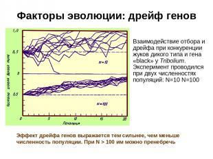 Факторы эволюции: дрейф генов Взаимодействие отбора и дрейфа при конкуренции жук