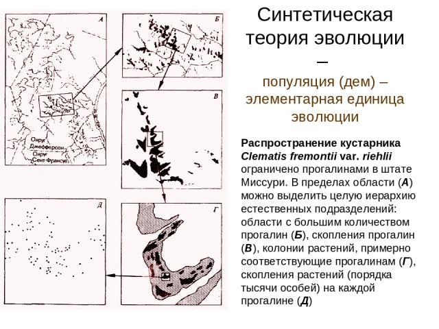 Синтетическая теория эволюции – популяция (дем) – элементарная единица эволюции Распространение кустарника Clematis fremontii var. riehlii ограничено прогалинами в штате Миссури. В пределах области (А) можно выделить целую иерархию естественных подр…