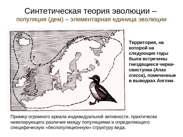 Синтетическая теория эволюции – популяция (дем) – элементарная единица эволюции Территория, на которой на следующие годы были встречены гнездящиеся чирки-свистунки (Anas crecca), помеченные в выводках Англии. Пример огромного ареала индивидуальной а…