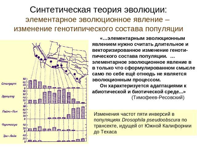 Синтетическая теория эволюции: элементарное эволюционное явление – изменение генотипического состава популяции «…элементарным эволюционным явлением нужно считать длительное и векторизированное изменение геноти-пического состава популяции. …элементар…