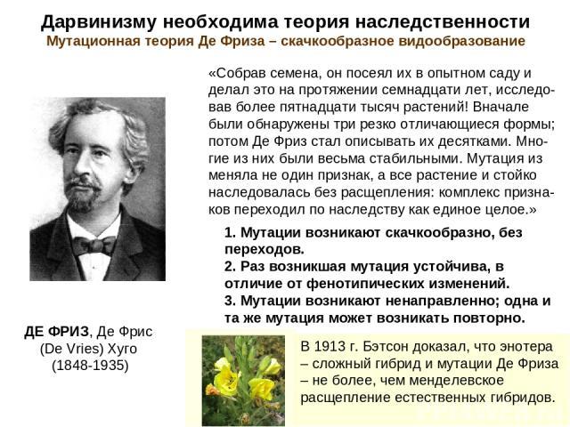 Дарвинизму необходима теория наследственности Мутационная теория Де Фриза – скачкообразное видообразование ДЕ ФРИЗ, Де Фрис (De Vries) Хуго (1848-1935) «Собрав семена, он посеял их в опытном саду и делал это на протяжении семнадцати лет, исследо-вав…