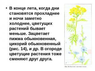 В конце лета, когда дни становятся прохладнее и ночи заметно холоднее, цветущих