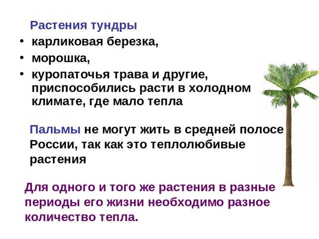 Растения тундры карликовая березка, морошка, куропаточья трава и другие, приспособились расти в холодном климате, где мало тепла Пальмы не могут жить в средней полосе России, так как это теплолюбивые растения Для одного и того же растения в разные п…