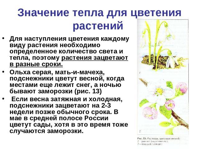 Значение тепла для цветения растений Для наступления цветения каждому виду растения необходимо определенное количество света и тепла, поэтому растения зацветают в разные сроки. Ольха серая, мать-и-мачеха, подснежники цветут весной, когда местами еще…