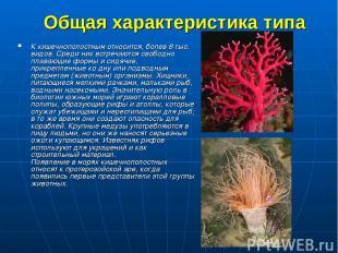 Общая характеристика типа К кишечнополостным относится, болев 8 тыс. видов. Сред