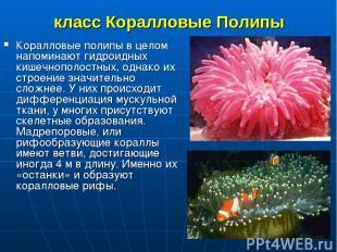 класс Коралловые Полипы Коралловые полипы в целом напоминают гидроидных кишечноп