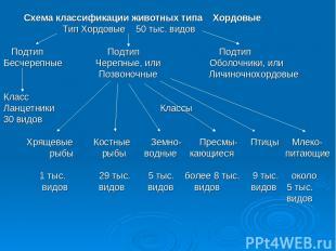 Схема классификации животных типа Хордовые Тип Хордовые 50 тыс. видов Подтип Под