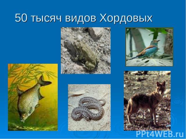 50 тысяч видов Хордовых