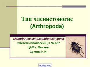 Тип членистоногие (Arthropoda) Методическая разработка урока Учитель биологии ЦО