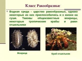 Класс Ракообразные Водная среда - царство ракообразных, однако некоторые из них