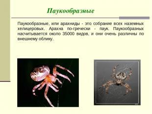 Паукообразные Паукообразные, или арахниды - это собрание всех наземных хелицеров