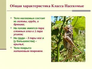 Общая характеристика Класса Насекомые Тело насекомых состоит из головы, груди, и
