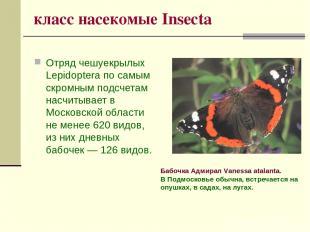 класс насекомые Insecta Отряд чешуекрылых Lepidoptera по самым скромным подсчета