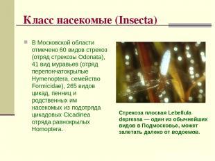 Класс насекомые (Insecta) В Московской области отмечено 60 видов стрекоз (отряд