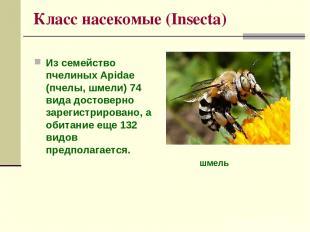 Класс насекомые (Insecta) Из семейство пчелиных Apidae (пчелы, шмели) 74 вида до
