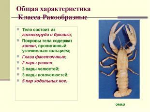 Общая характеристика Класса Ракообразные Тело состоит из головогруди и брюшка; П