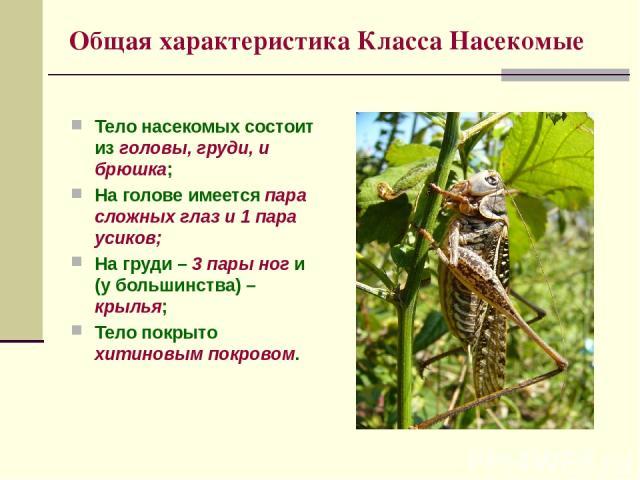 Общая характеристика Класса Насекомые Тело насекомых состоит из головы, груди, и брюшка; На голове имеется пара сложных глаз и 1 пара усиков; На груди – 3 пары ног и (у большинства) – крылья; Тело покрыто хитиновым покровом.