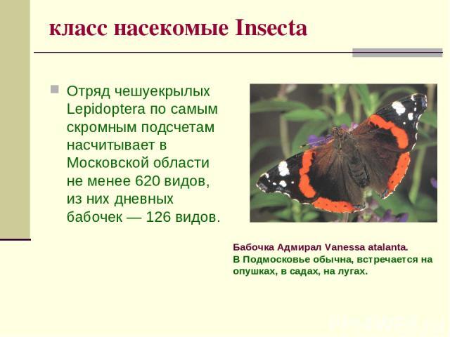 класс насекомые Insecta Отряд чешуекрылых Lepidoptera по самым скромным подсчетам насчитывает в Московской области не менее 620 видов, из них дневных бабочек — 126 видов. Бабочка Адмирал Vanessa atalanta. В Подмосковье обычна, встречается на опушках…