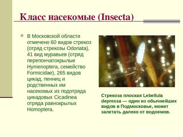 Класс насекомые (Insecta) В Московской области отмечено 60 видов стрекоз (отряд стрекозы Odonata), 41 вид муравьев (отряд перепончатокрылые Hymenoptera, семейство Formicidae), 265 видов цикад, пенниц и родственных им насекомых из подотряда цикадовых…