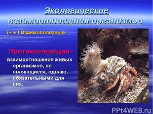 Экологические взаимоотношения организмов (+ + ) Взаимополезные Протокооперация -