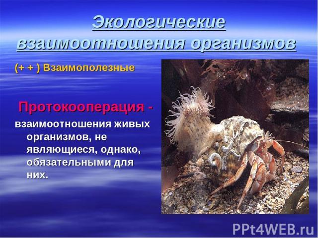 Экологические взаимоотношения организмов (+ + ) Взаимополезные Протокооперация - взаимоотношения живых организмов, не являющиеся, однако, обязательными для них.