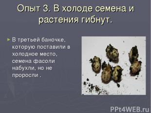 Опыт 3. В холоде семена и растения гибнут. В третьей баночке, которую поставили