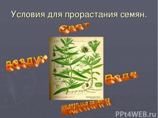 Условия для прорастания семян.