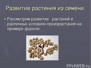 Развитие растения из семени. Рассмотрим развитие растений в различных условиях п