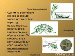 Одним из важнейших этапов эволюции животного мира был переход одноклеточных прос