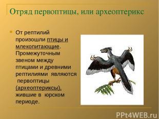 Отряд первоптицы, или археоптерикс От рептилий произошли птицы и млекопитающие.