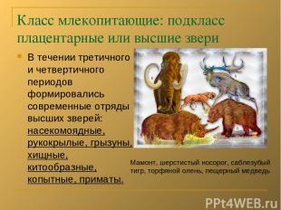 Класс млекопитающие: подкласс плацентарные или высшие звери В течении третичного