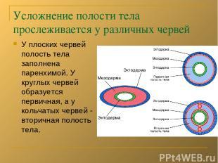 Усложнение полости тела прослеживается у различных червей У плоских червей полос