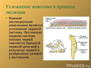 Усложнение животных в процессе эволюции Важным эволюционным изменением является