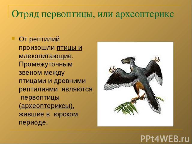 Отряд первоптицы, или археоптерикс От рептилий произошли птицы и млекопитающие. Промежуточным звеном между птицами и древними рептилиями являются первоптицы (археоптериксы), жившие в юрском периоде.