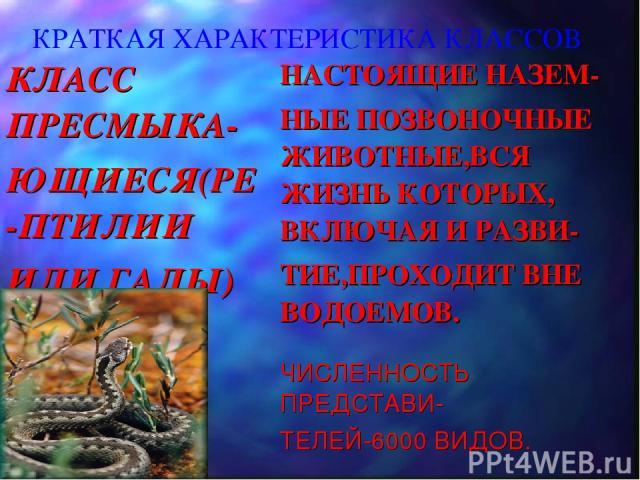 КРАТКАЯ ХАРАКТЕРИСТИКА КЛАССОВ КЛАСС ПРЕСМЫКА- ЮЩИЕСЯ(РЕ-ПТИЛИИ ИЛИ ГАДЫ) НАСТОЯЩИЕ НАЗЕМ- НЫЕ ПОЗВОНОЧНЫЕ ЖИВОТНЫЕ,ВСЯ ЖИЗНЬ КОТОРЫХ, ВКЛЮЧАЯ И РАЗВИ- ТИЕ,ПРОХОДИТ ВНЕ ВОДОЕМОВ. ЧИСЛЕННОСТЬ ПРЕДСТАВИ- ТЕЛЕЙ-6000 ВИДОВ.