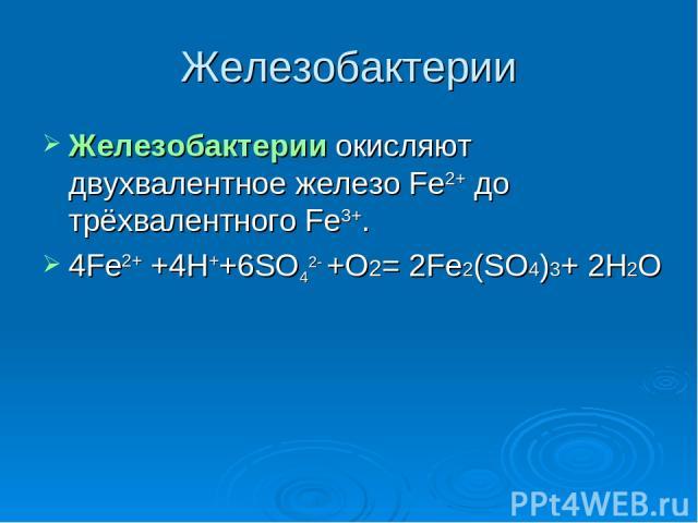 Железобактерии Железобактерии окисляют двухвалентное железо Fe2+ до трёхвалентного Fe3+. 4Fe2+ +4H++6SO42- +O2= 2Fe2(SO4)3+ 2H2O