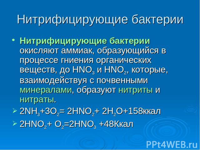 Нитрифицирующие бактерии Нитрифицирующие бактерии окисляют аммиак, образующийся в процессе гниения органических веществ, до HNO3 и HNO2, которые, взаимодействуя с почвенными минералами, образуют нитриты и нитраты. 2NH3+3O2= 2HNO2+ 2H2O+158ккал 2HNO2…
