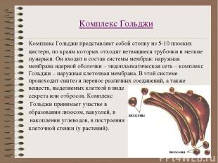 Комплекс Гольджи Комплекс Гольджи представляет собой стопку из 5-10 плоских цист