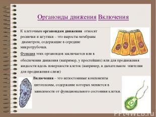 Органоиды движения Включения К клеточным органоидам движения относят реснички и