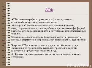 АТФ АТФ (аденозинтрифосфорная кислота) – это нуклеотид, относящийся к группе нук