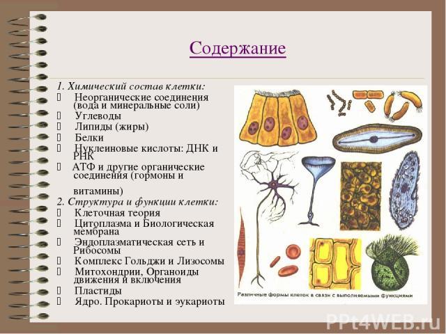 Содержание 1. Химический состав клетки: * Неорганические соединения (вода и минеральные соли) * Углеводы * Липиды (жиры) * Белки * Нуклеиновые кислоты: ДНК и РНК * АТФ и другие органические соединения (гормоны и витамины) 2. С…