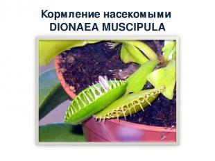 Кормление насекомыми DIONAEA MUSCIPULA