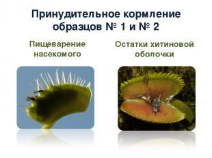 Принудительное кормление образцов № 1 и № 2 Пищеварение насекомого Остатки хитин